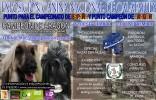 Perros de todo el país participan este fin de semana en la Exposición Canina Nacional de Calatayud