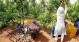 Calatayud ofrece colaboración a la DGA para elaborar los protocolos de la campaña agrícola